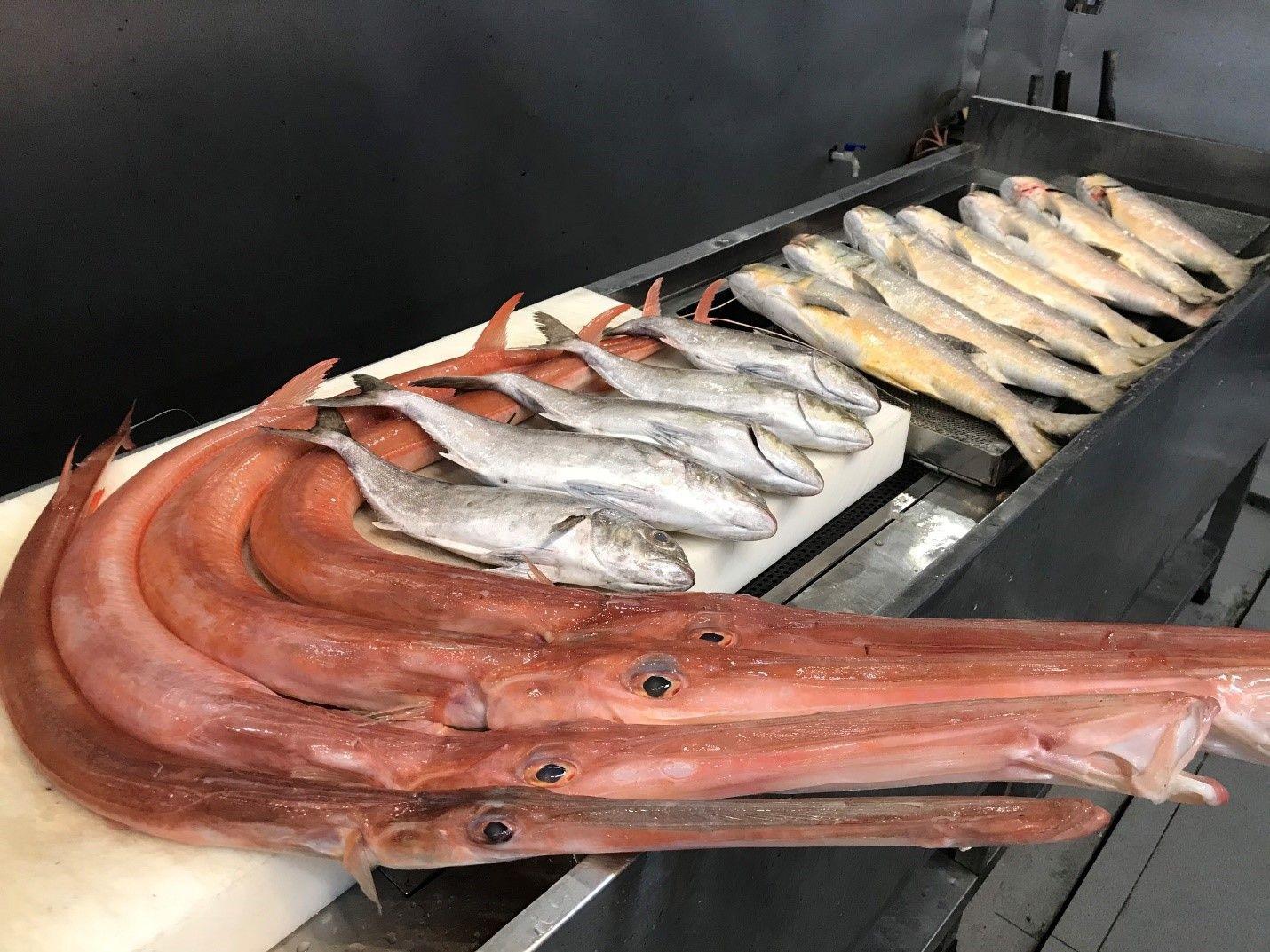 Siêu thị cá sạch – Sự chọn lựa hoàn hảo về hải sản - Ảnh 5.