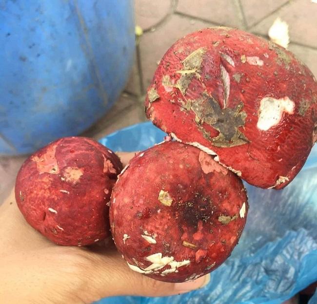 Nấm chẹo ở Lạng Sơn là nấm gì mà đem sấy khô được bao nhiêu thương lái Trung Quốc mua hết bấy nhiêu? - Ảnh 2.