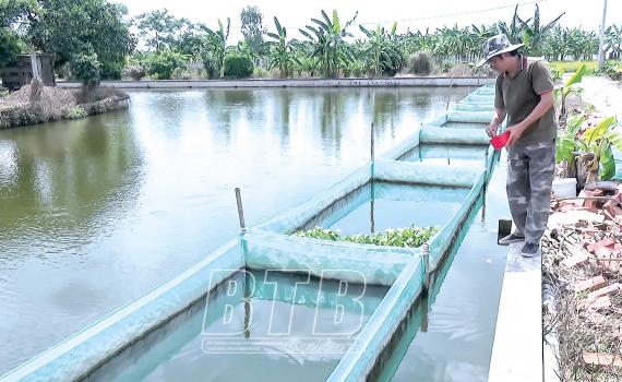 Thái Bình: Nuôi cá rô đồng dày đặc trong ao, bắt bán hàng tấn, một nông dân thành tỷ phú - Ảnh 1.