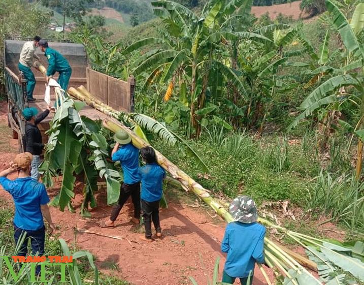 Sơn La: Xúc động trước cảnh người dân nấu cơm và lên rừng lấy cỏ, chặt chuối cho các gia đình bị cách ly  - Ảnh 1.