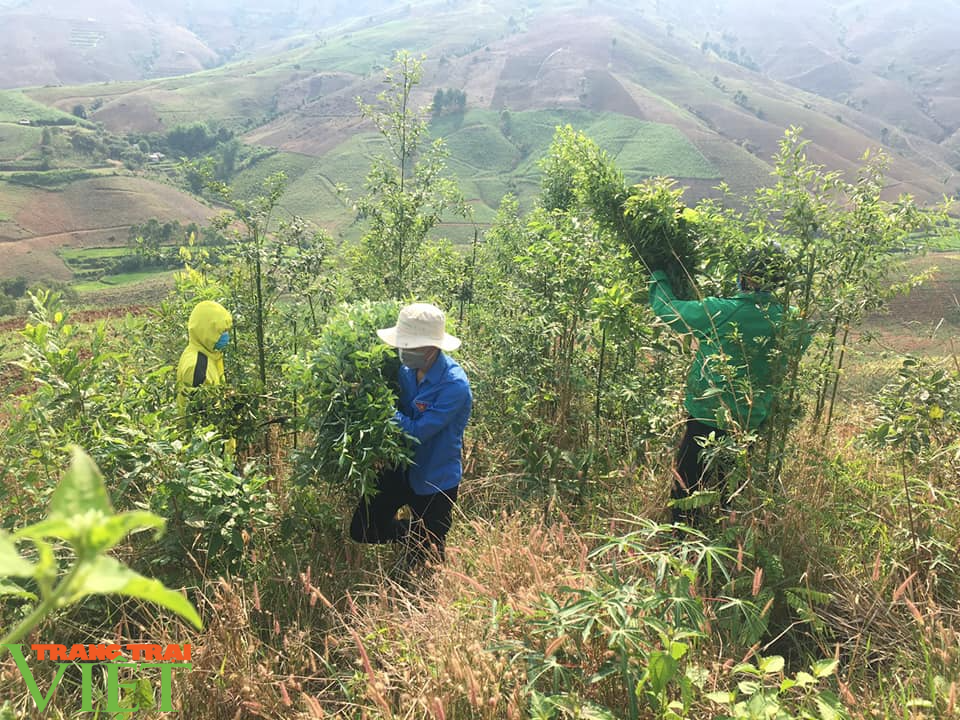 Sơn La: Xúc động trước cảnh người dân nấu cơm và lên rừng lấy cỏ, chặt chuối cho các gia đình bị cách ly  - Ảnh 2.