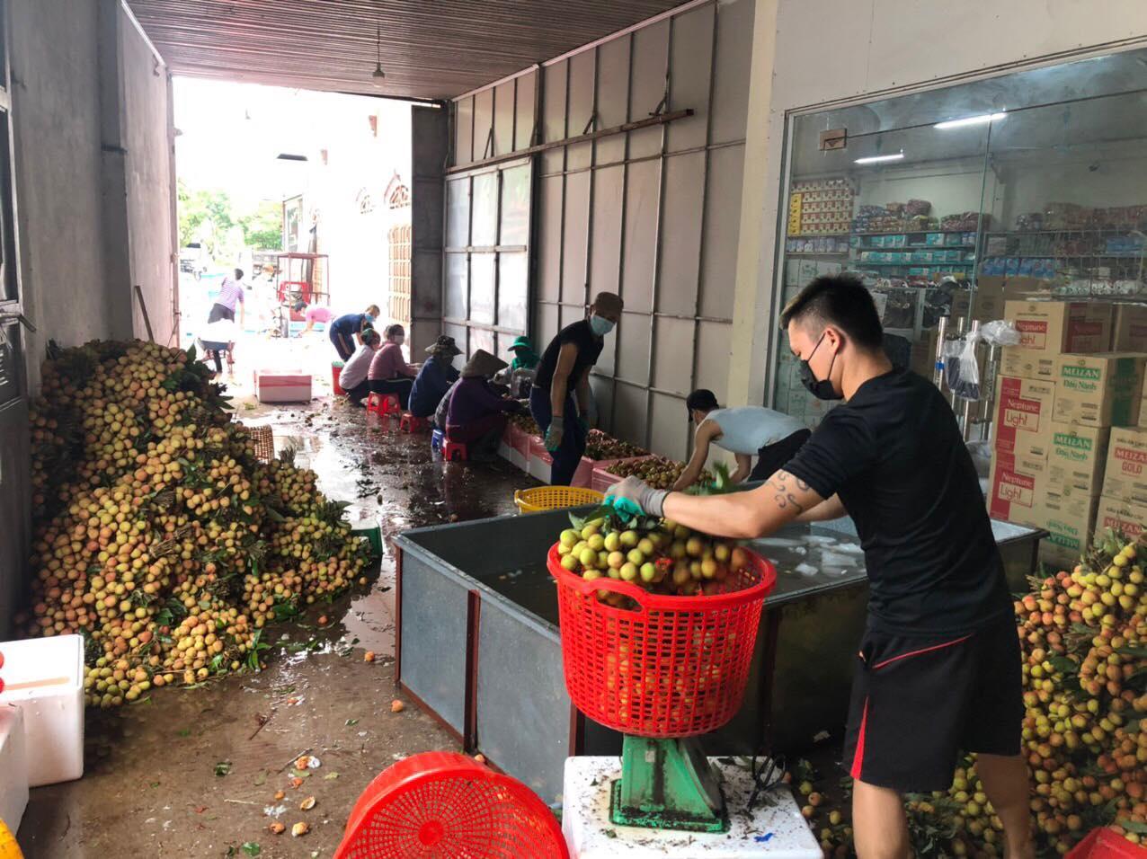 Vải thiều thông quan sang Trung Quốc thuận lợi, vải sớm hút khách, Bắc Giang linh hoạt các kịch bản tiêu thụ - Ảnh 1.