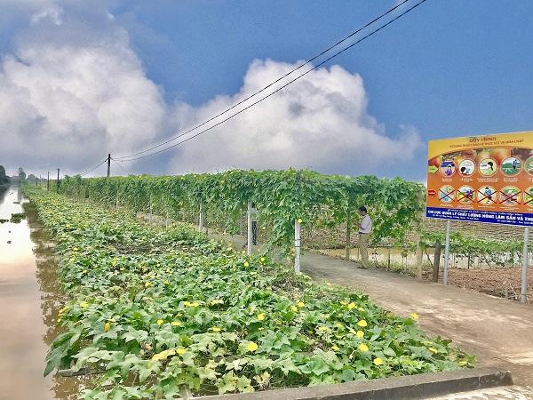 Yên Khánh và mục tiêu huyện nông thôn mới kiểu mẫu - Ảnh 5.