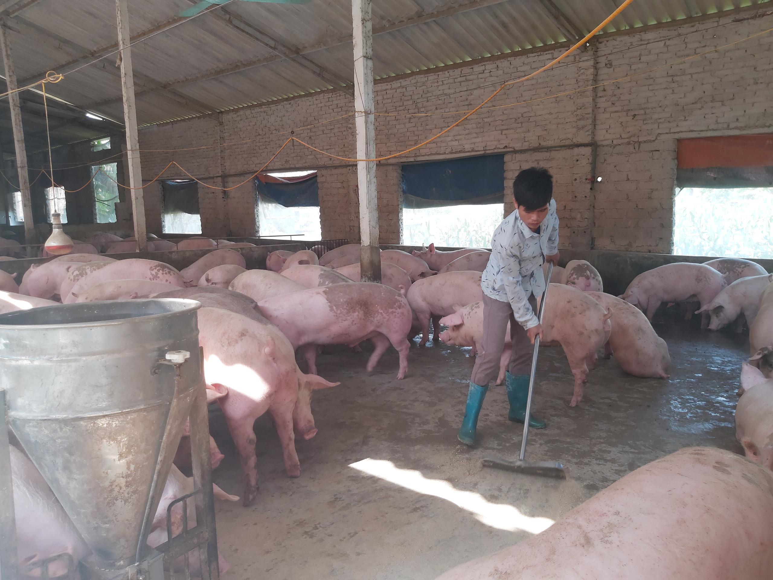 Tìm lối ra cho nông sản mùa dịch Covid-19 (bài 2): Kiến nghị tạo điều kiện lưu thông nông sản - Ảnh 1.