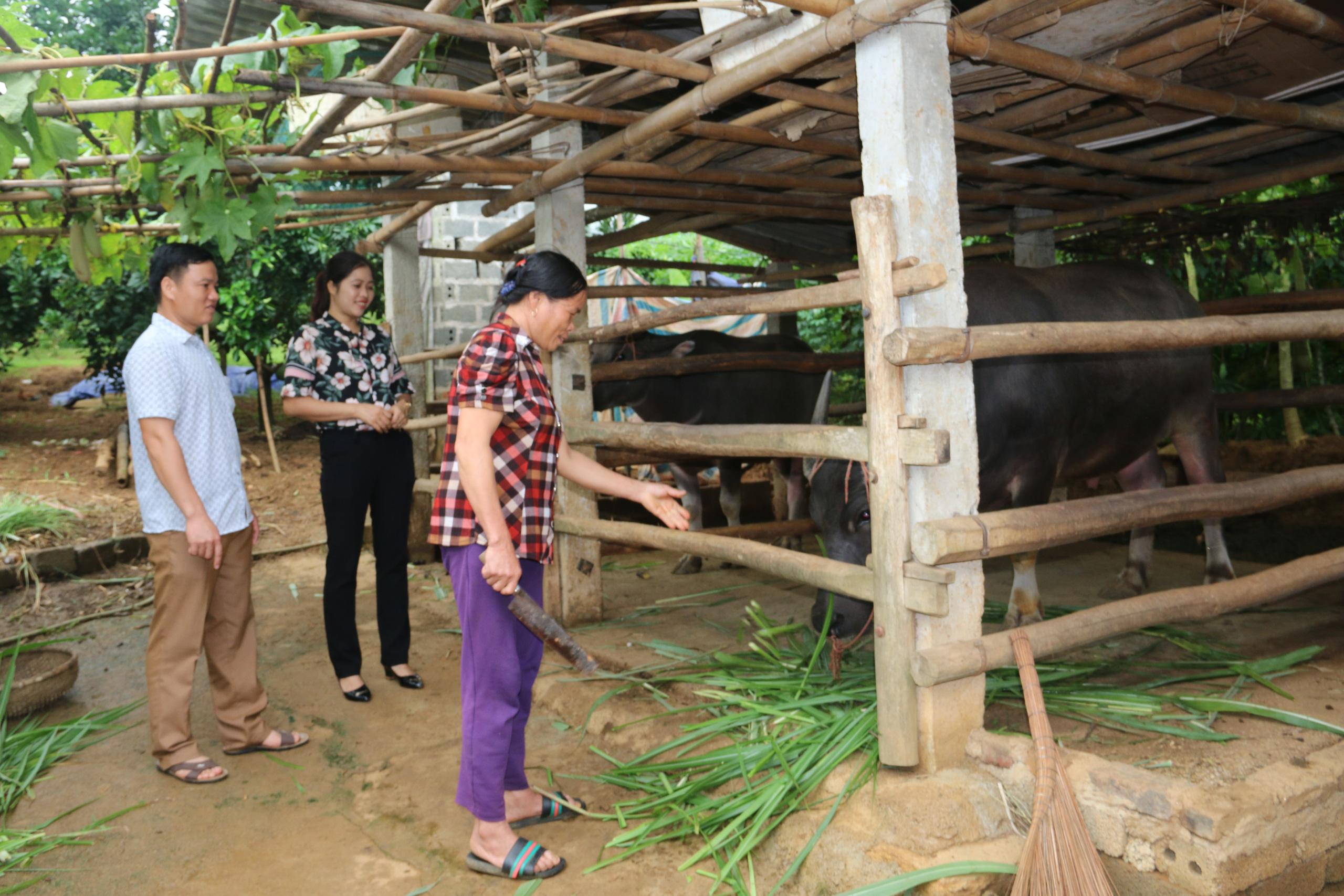 Hội viên nông dân Hòa Bình: Khẳng định vai trò nòng cốt trong XDNTM - Ảnh 6.