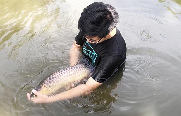 Chàng trai Đồng Nai nuôi cá quý hiếm trong ao làng, bất ngờ nhất là điều gì? - Ảnh 3.