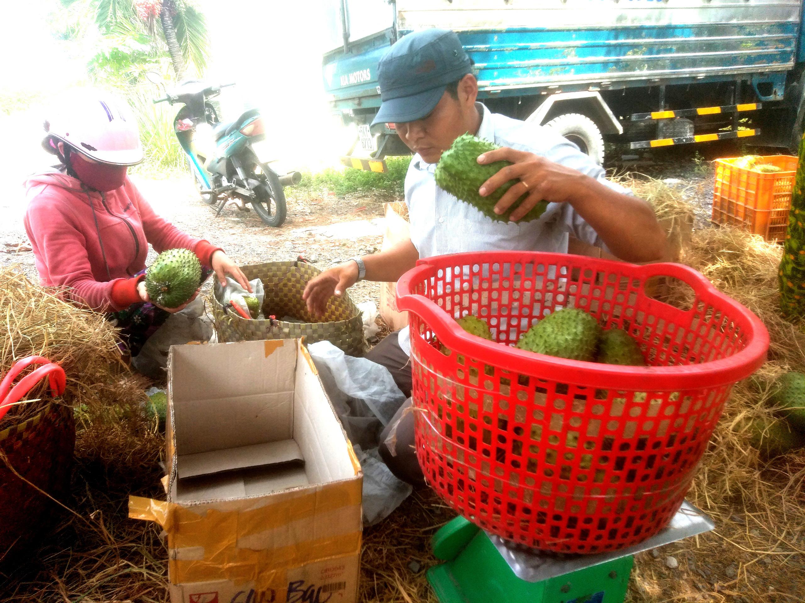 """Nhiều doanh nghiệp đang làm """"bà đỡ"""" hỗ trợ thu mua trái cây cho nông dân trong đại dịch Covid-19 - Ảnh 4."""
