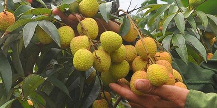 Thời điểm không nên ăn quả vải, tránh gây hại sức khỏe  - Ảnh 7.