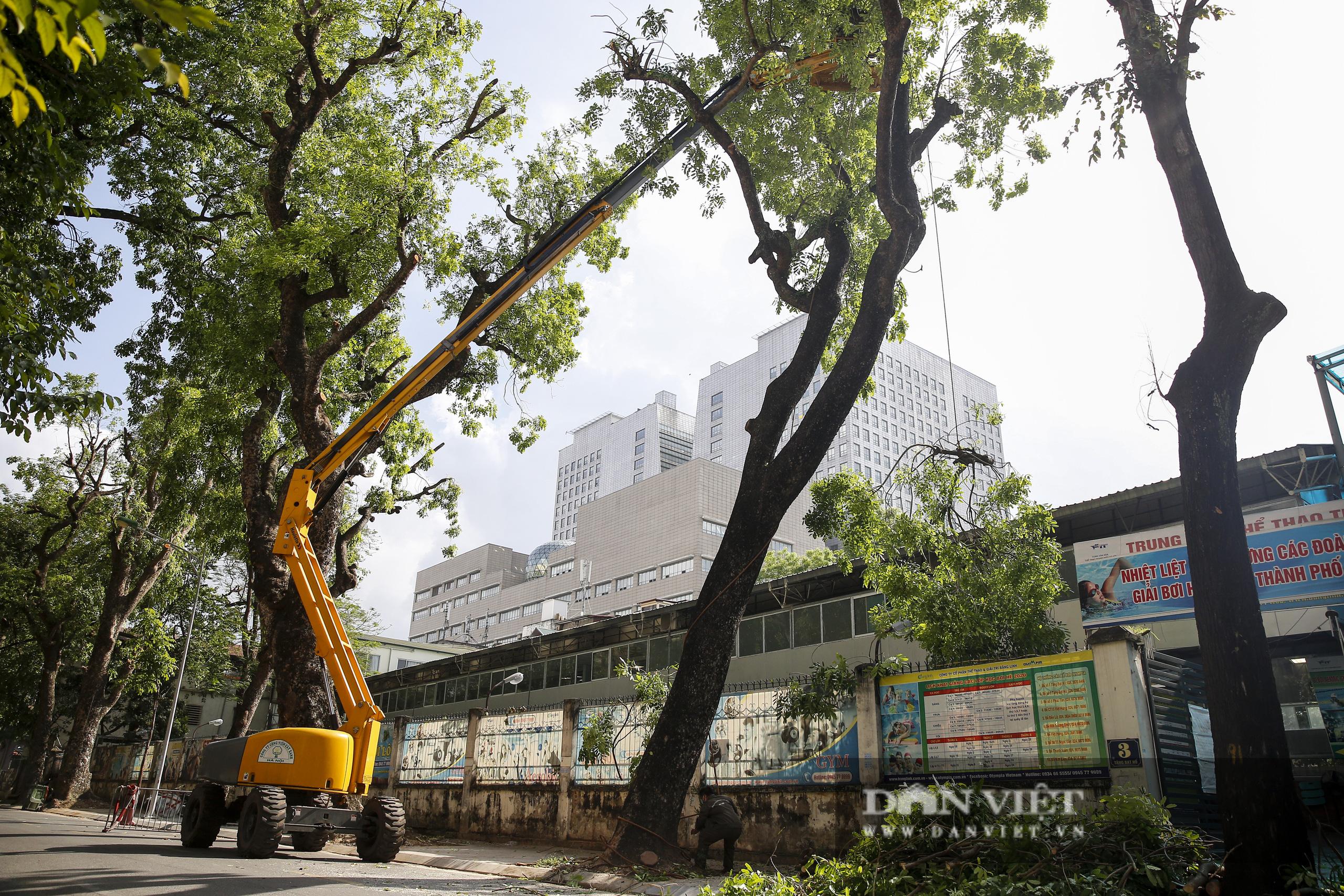 Hà Nội: Dùng xe nâng người dài 26 mét cắt tỉa hơn 20.000 cây nguy hiểm - Ảnh 1.