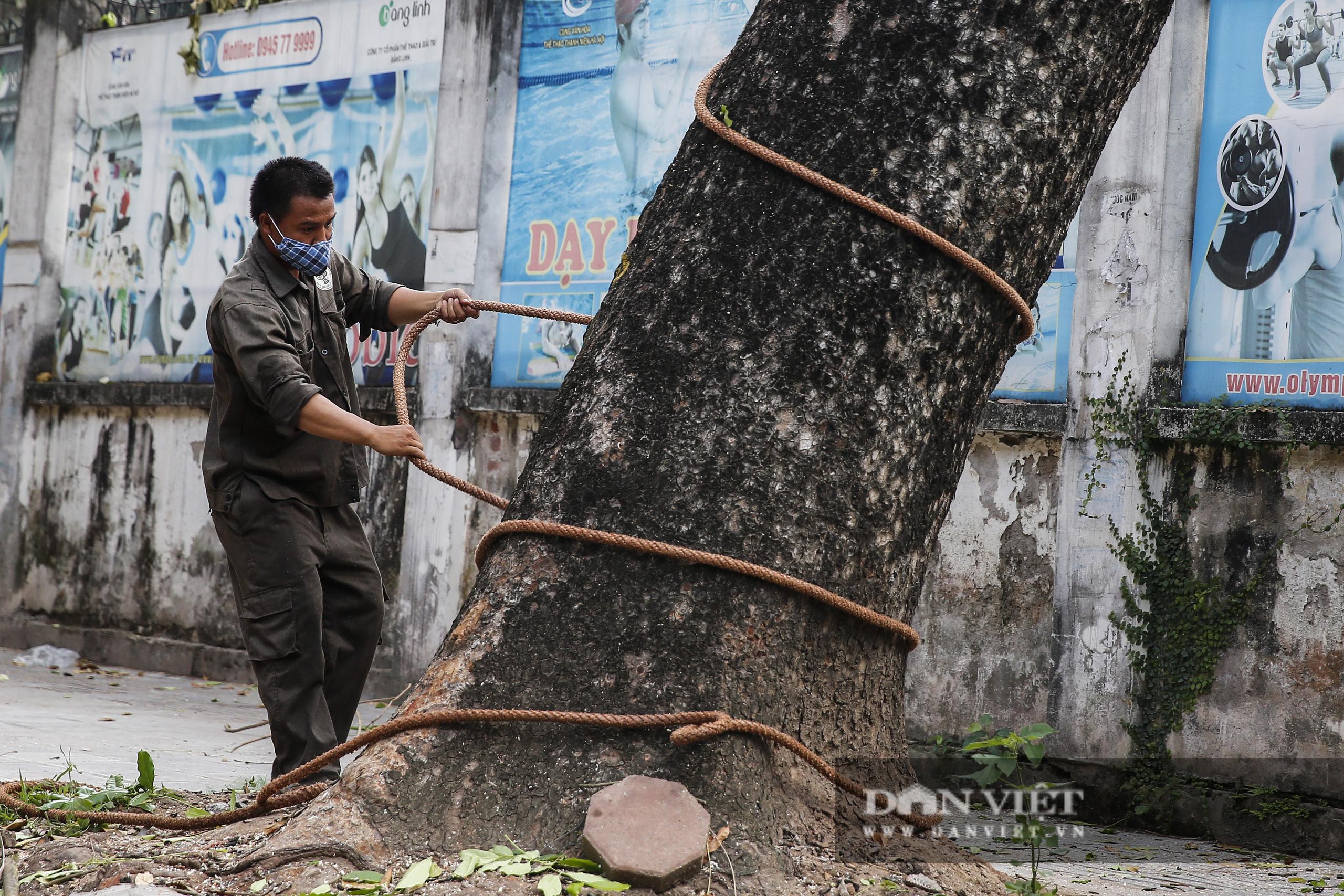 Hà Nội: Dùng xe nâng người dài 26 mét cắt tỉa hơn 20.000 cây nguy hiểm - Ảnh 3.