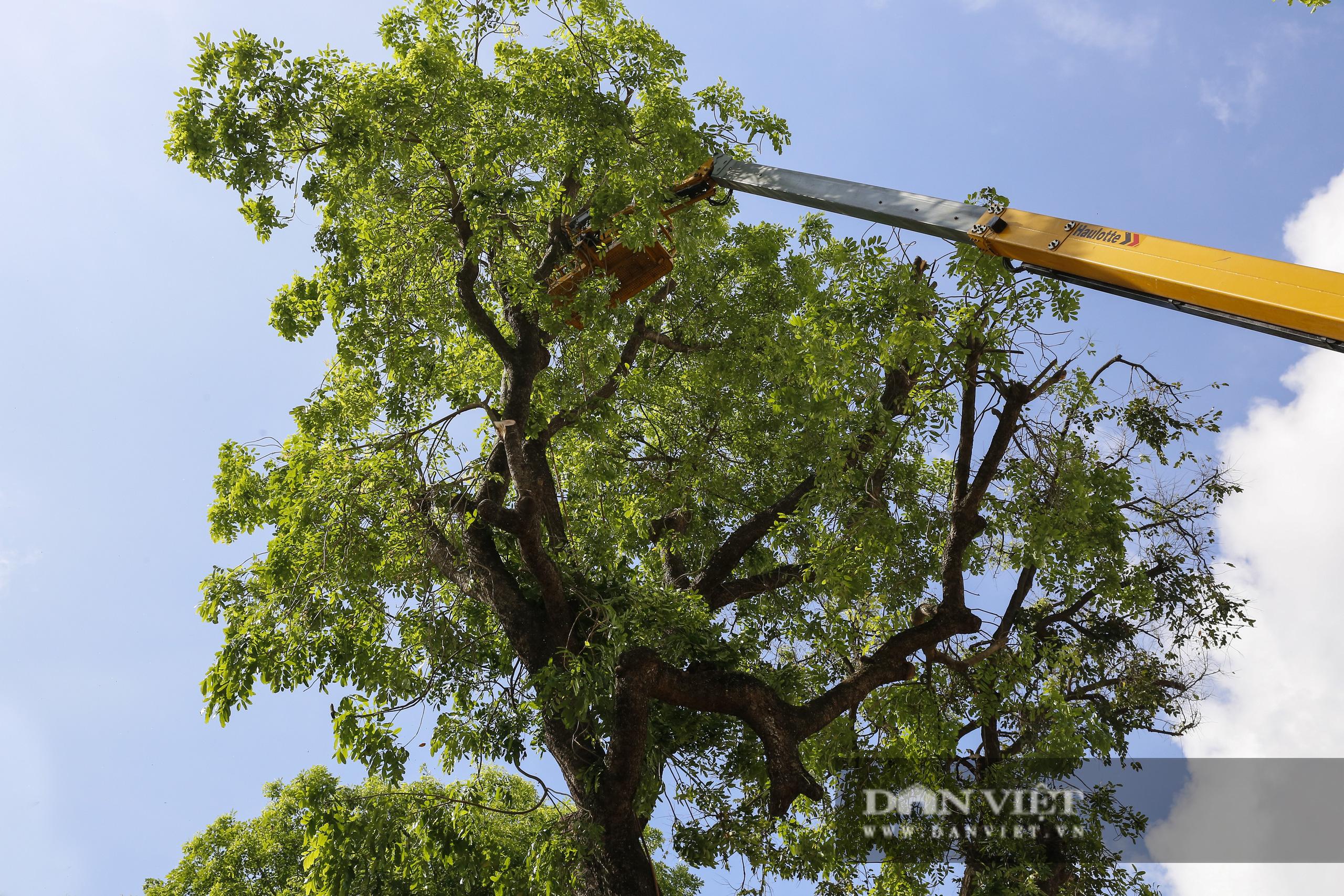 Hà Nội: Dùng xe nâng người dài 26 mét cắt tỉa hơn 20.000 cây nguy hiểm - Ảnh 4.