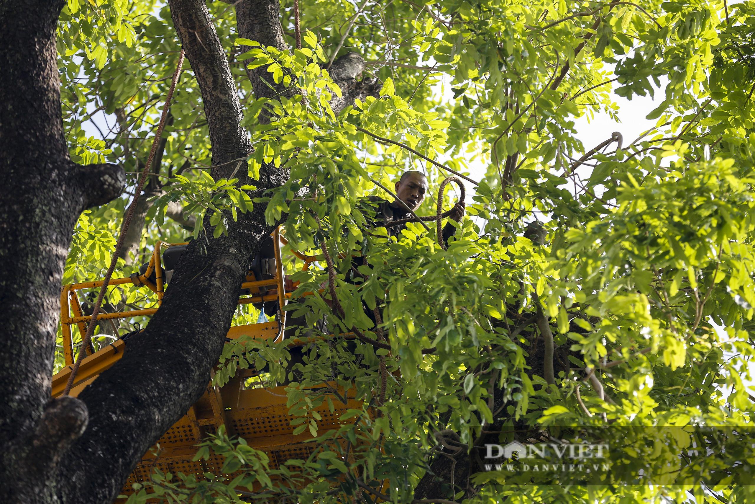 Hà Nội: Dùng xe nâng người dài 26 mét cắt tỉa hơn 20.000 cây nguy hiểm - Ảnh 5.