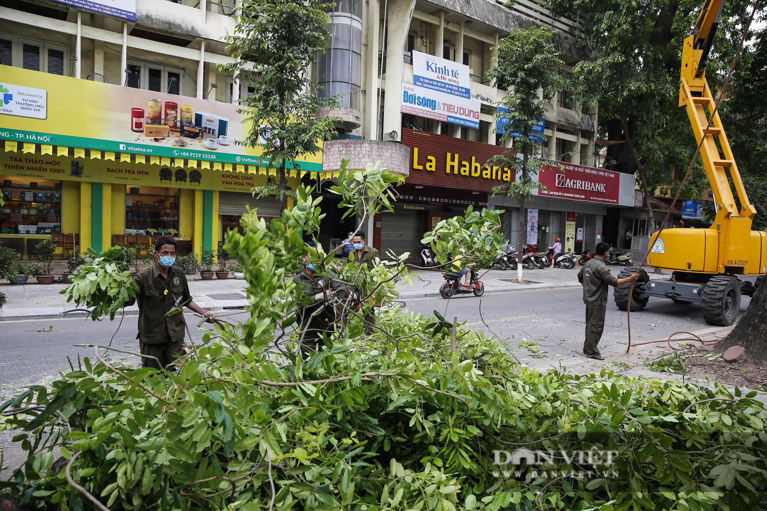 Hà Nội: Dùng xe nâng người dài 26 mét cắt tỉa hơn 20.000 cây nguy hiểm - Ảnh 10.