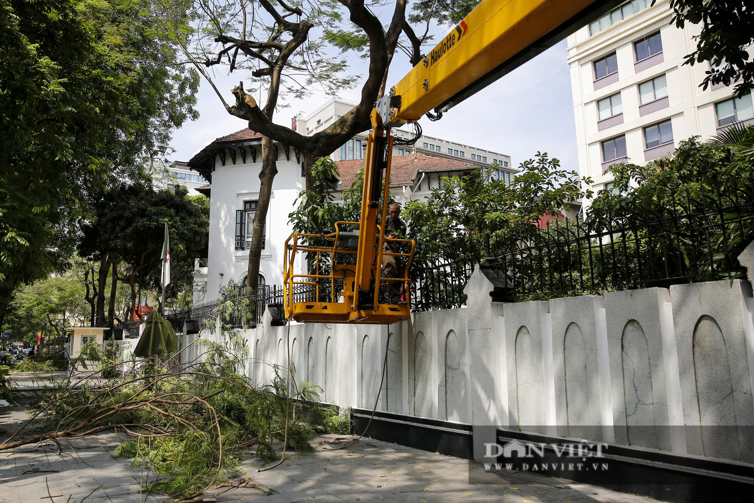 Hà Nội: Dùng xe nâng người dài 26 mét cắt tỉa hơn 20.000 cây nguy hiểm - Ảnh 11.