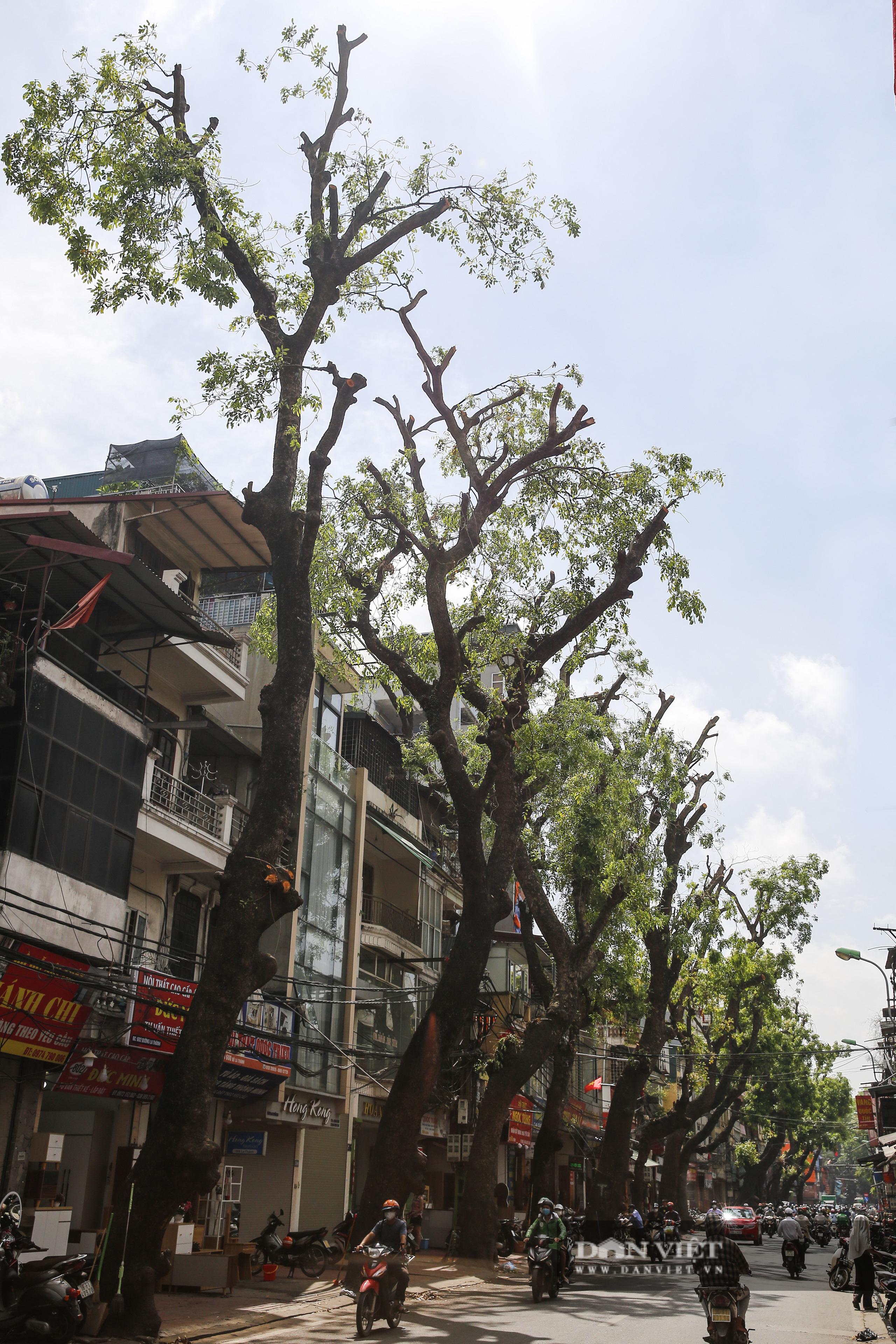 Hà Nội: Dùng xe nâng người dài 26 mét cắt tỉa hơn 20.000 cây nguy hiểm - Ảnh 12.