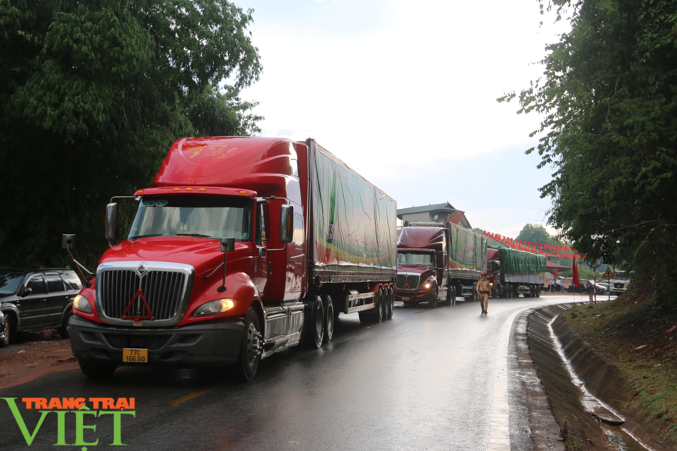 Sơn La: Bàn giao xoài theo thoả thuận tiêu thụ cho các đơn vị chế biến, xuất khẩu - Ảnh 7.