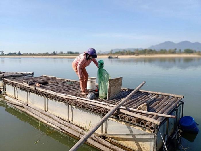 Quảng Ngãi: Nông dân nuôi thứ cá gì mà vừa dài vừa to bự, bán 600.000 đồng/kg mà nhiều người cứ mua? - Ảnh 1.