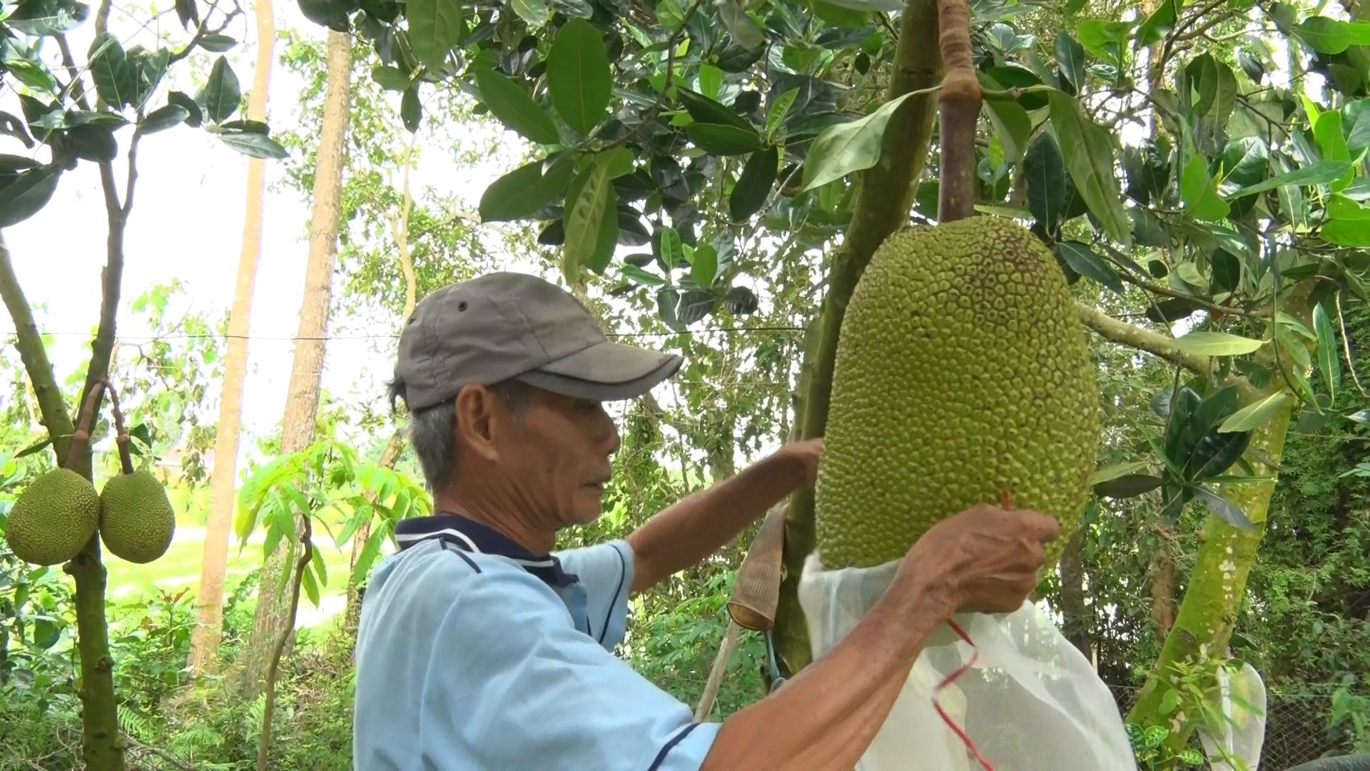 """Nhiều doanh nghiệp đang làm """"bà đỡ"""" hỗ trợ thu mua trái cây cho nông dân trong đại dịch Covid-19 - Ảnh 3."""
