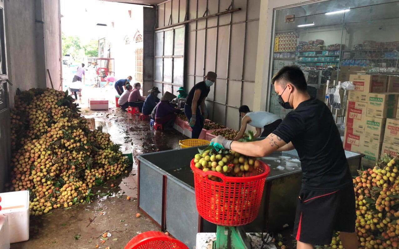 Vải thiều Bắc Giang bị ép giá còn 2.000 đồng/kg: Huyện khẳng định không đúng sự thật, đang truy kẻ loan tin xấu