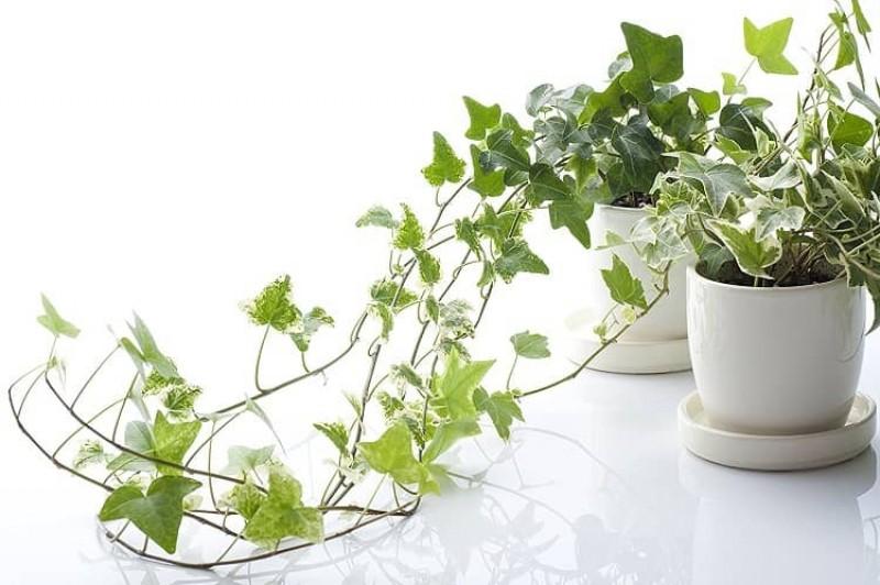 Trồng ngay 6 loại cây này trong phòng làm việc là không lo túng thiếu, đắc tài đắc lộc, làm ăn vượng phát - Ảnh 4.