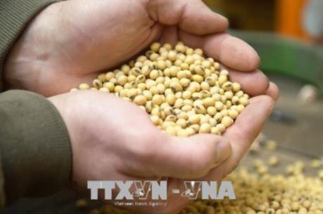 Xuất khẩu nông sản của Mỹ sang Trung Quốc dự kiến cao kỷ lục - Ảnh 1.