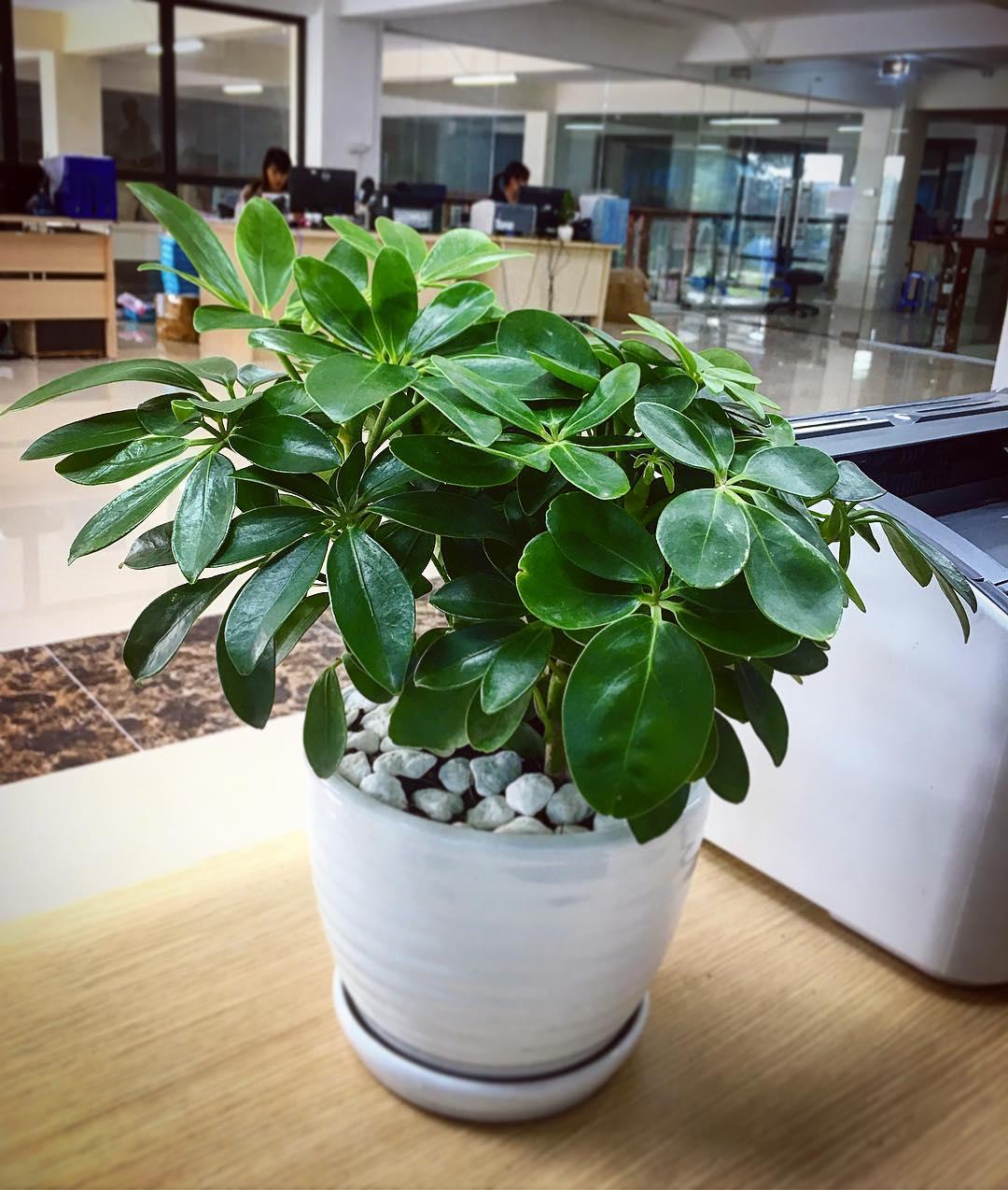 Trồng ngay 6 loại cây này trong phòng làm việc là không lo túng thiếu, đắc tài đắc lộc, làm ăn vượng phát - Ảnh 6.