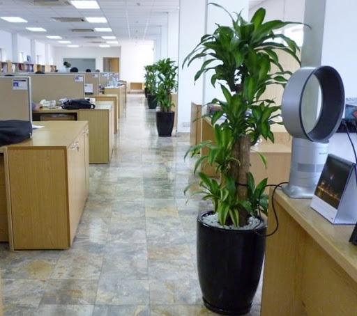 Trồng ngay 6 loại cây này trong phòng làm việc là không lo túng thiếu, đắc tài đắc lộc, làm ăn vượng phát - Ảnh 11.
