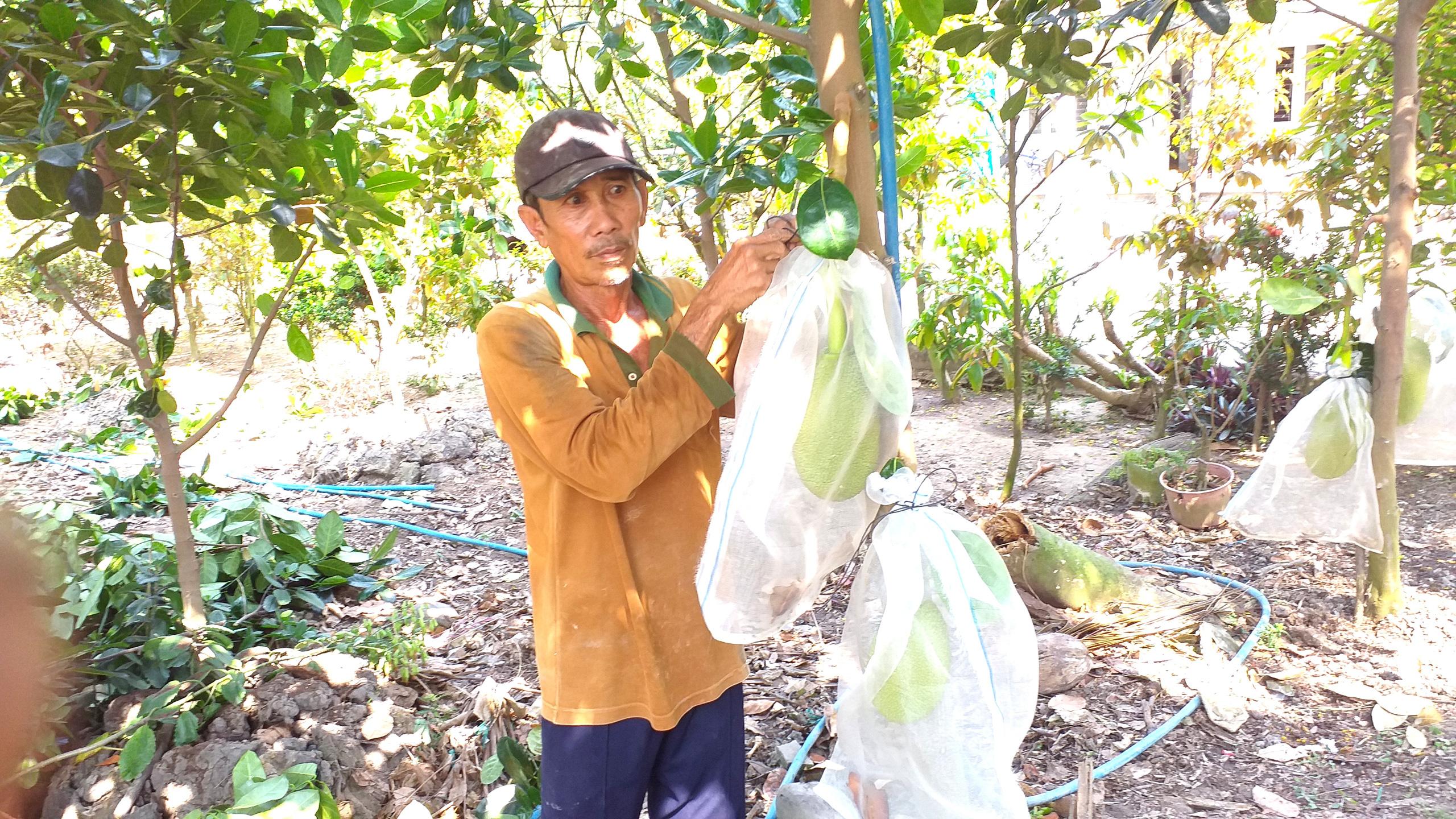 Giá mít còn 500 đồng/kg, chủ vườn đau đớn làm điều này  - Ảnh 3.
