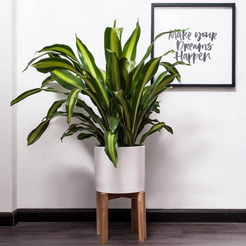 Trồng ngay 6 loại cây này trong phòng làm việc là không lo túng thiếu, đắc tài đắc lộc, làm ăn vượng phát - Ảnh 10.