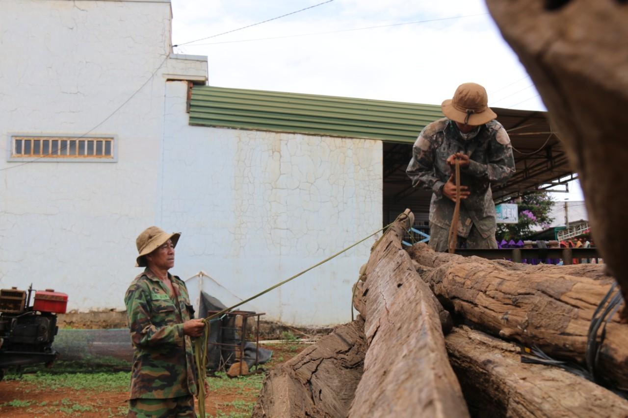 Đắk Nông: Dân lại ồ ạt trồng hồ tiêu vì giá tăng cao - Ảnh 1.