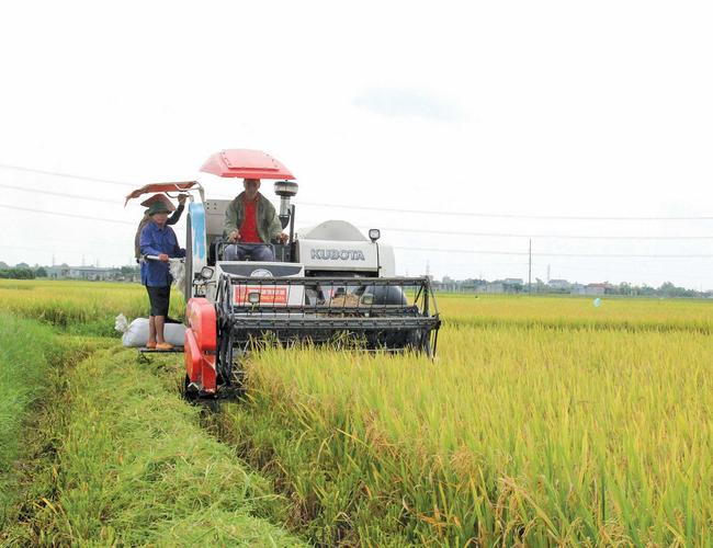 Vụ đông xuân miền Bắc thắng lợi: Giảm 12.000ha trồng, tăng 34.000 tấn lúa - Ảnh 3.