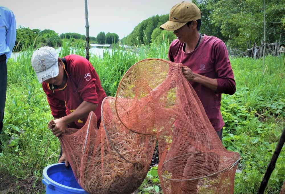 Đặc sản tôm khô Rạch Gốc của tỉnh Cà Mau được làm từ mấy loại tôm, loại tôm nào làm khô ngon nhất? - Ảnh 1.