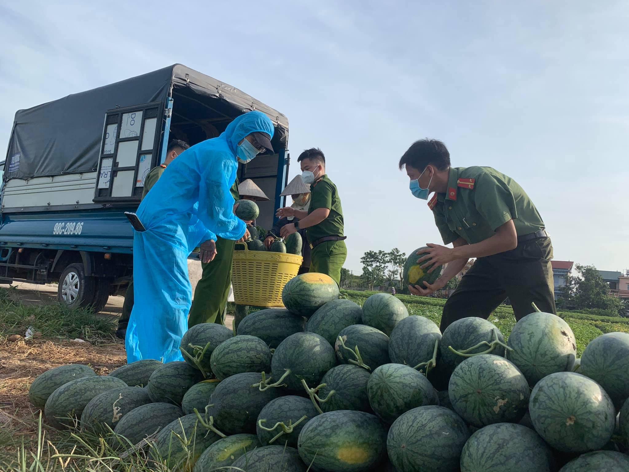 """Công an vùng """"tâm dịch"""" Bắc Giang ra đồng thu hoạch nông sản giúp nông dân - Ảnh 2."""