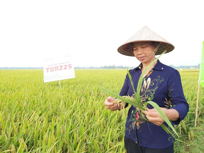 Vụ đông xuân miền Bắc thắng lợi: Giảm 12.000ha trồng, tăng 34.000 tấn lúa - Ảnh 1.