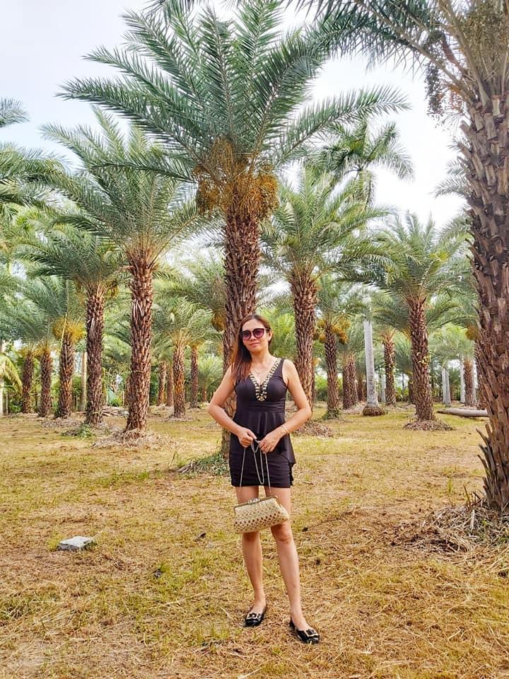 Ngất ngây với vẻ đẹp của vườn chà là ở Sa Đéc - Ảnh 6.