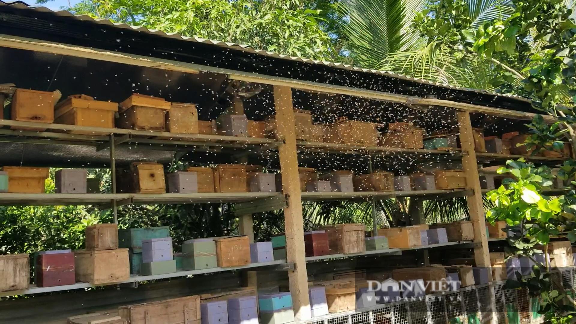 """Anh thợ cắt tóc nuôi 700 đàn ong dú, mỗi năm """"tay trái"""" thu trăm triệu - Ảnh 5."""