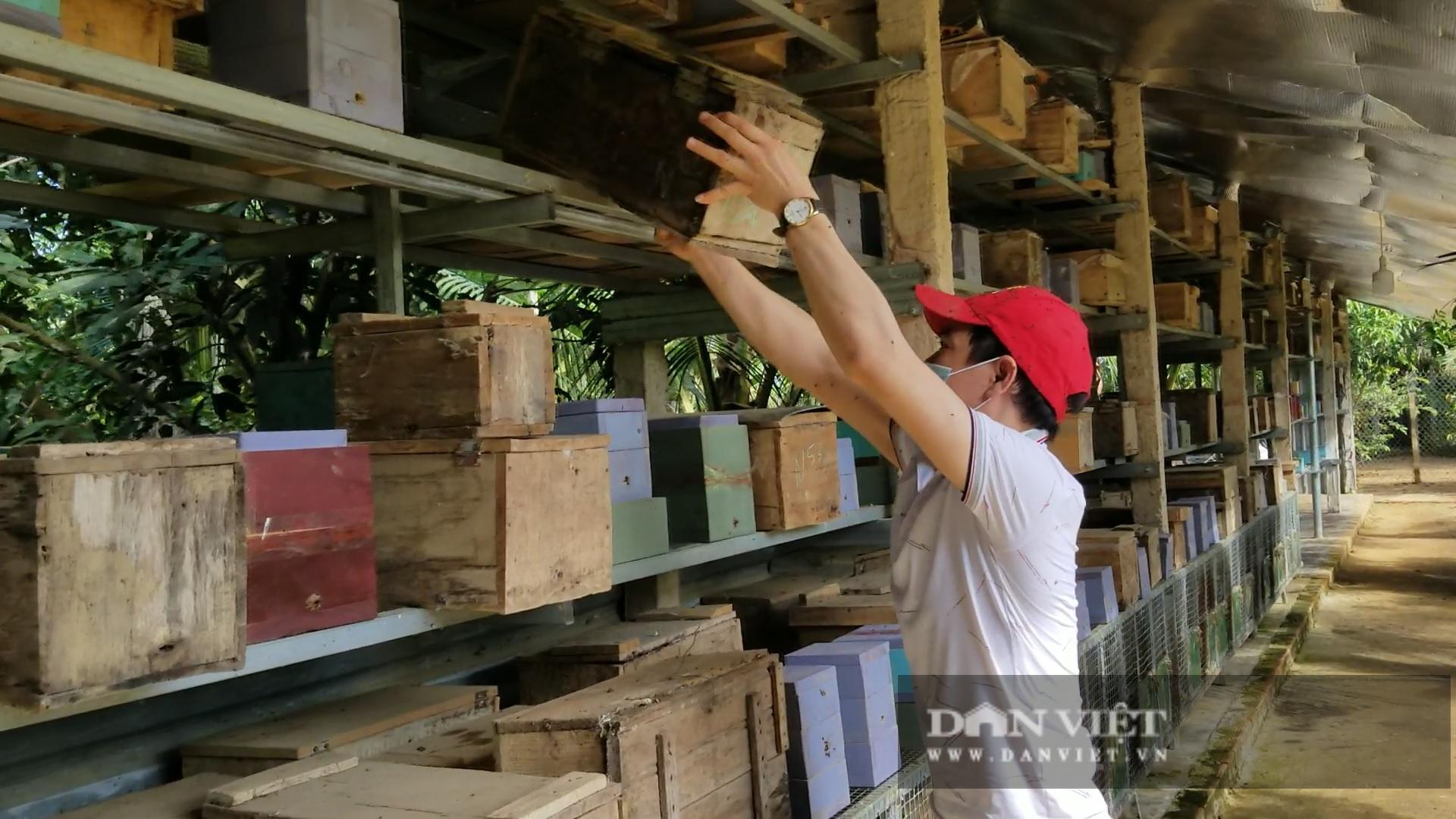 """Anh thợ cắt tóc nuôi 700 đàn ong dú, mỗi năm """"tay trái"""" thu trăm triệu - Ảnh 6."""