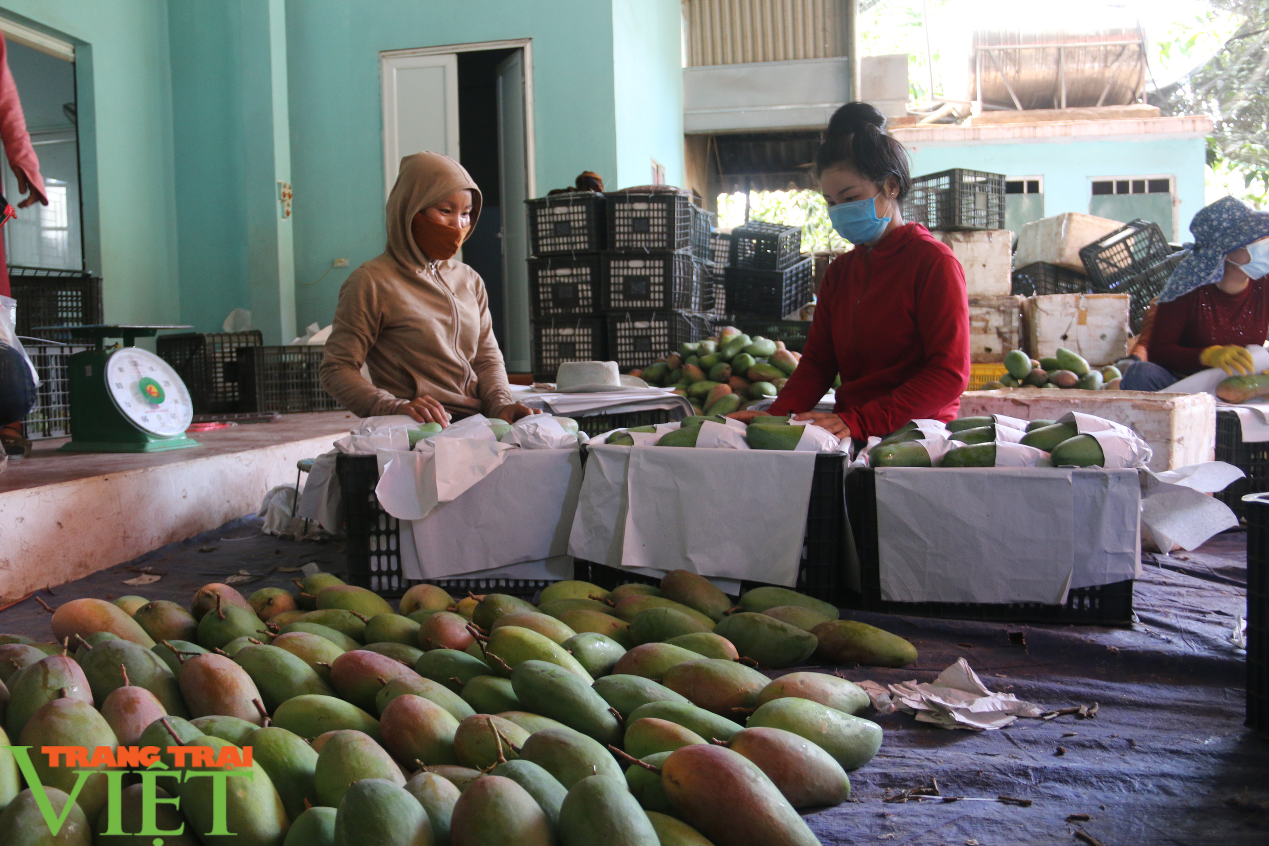 Sơn La: Đưa ra các giải pháp hỗ trợ sản phẩm nông sản vươn ra thị trường trong nước và quốc tế - Ảnh 2.