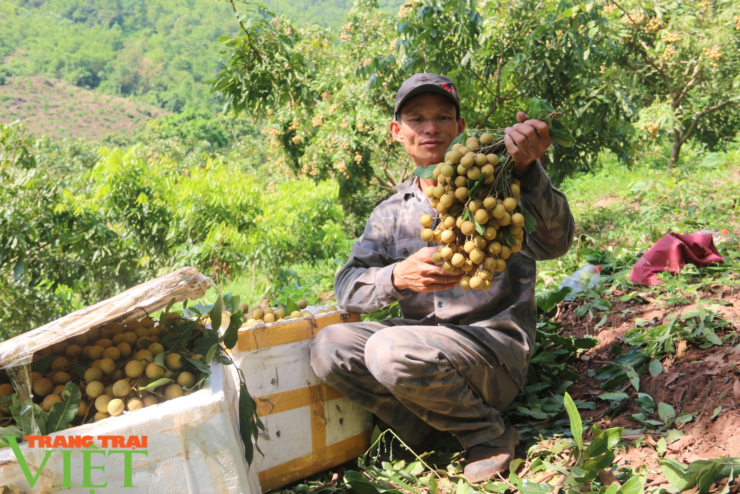 Sơn La: Đưa ra các giải pháp hỗ trợ sản phẩm nông sản vươn ra thị trường trong nước và quốc tế - Ảnh 3.