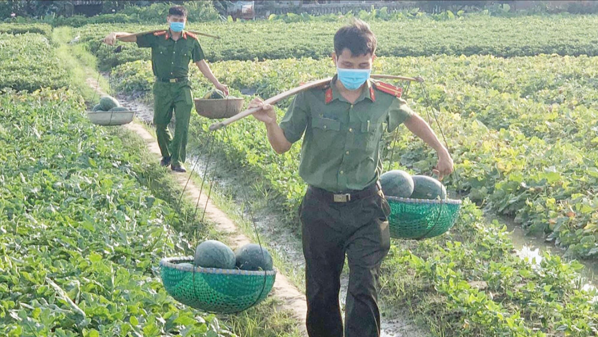 """Công an vùng """"tâm dịch"""" Bắc Giang ra đồng thu hoạch nông sản giúp nông dân - Ảnh 1."""