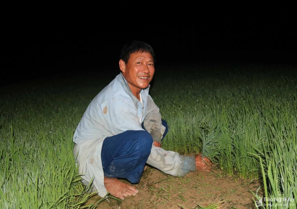 Tránh nắng nóng, người dân Nghệ An chong đèn nhổ mạ, cấy lúa đêm, ngoài ruộng vui hơn ở nhà - Ảnh 8.