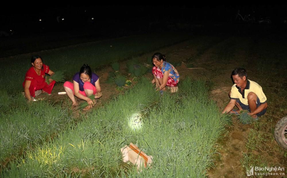 Tránh nắng nóng, người dân Nghệ An chong đèn nhổ mạ, cấy lúa đêm, ngoài ruộng vui hơn ở nhà - Ảnh 9.