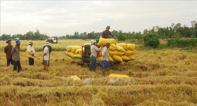 Thị trường nông sản tuần qua: Giá cà phê bật tăng mạnh trở lại, vượt 34.000 đồng/kg - Ảnh 1.