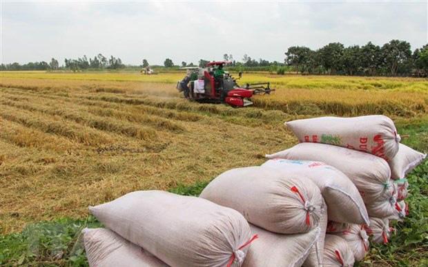 Vụ đông xuân ở phía Bắc đạt kỷ lục về cả năng suất và sản lượng lúa