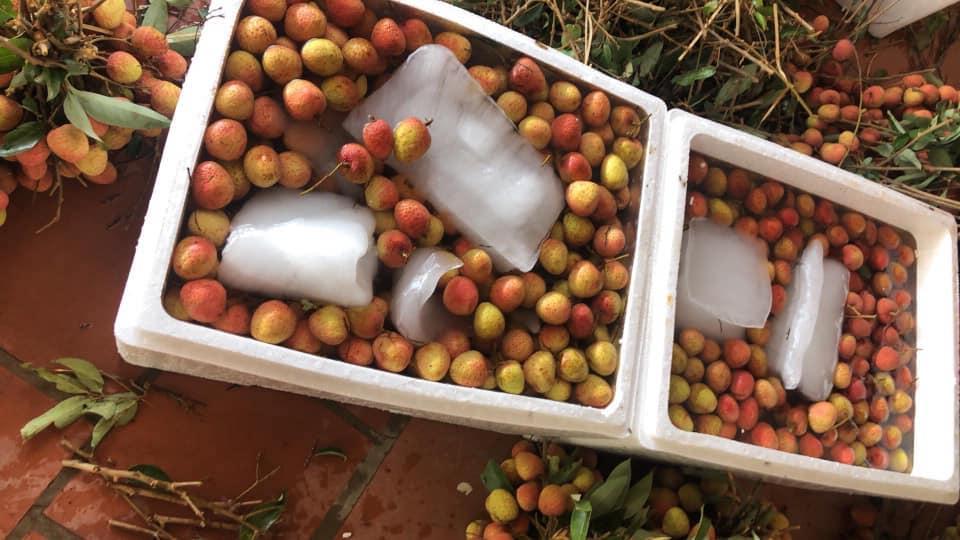 """Người Nhật mua hết veo quả tiến vua giá gần nửa triệu đồng/kg, Bắc Giang tiếp tục """"tấn công"""" thị trường Mỹ - Ảnh 3."""