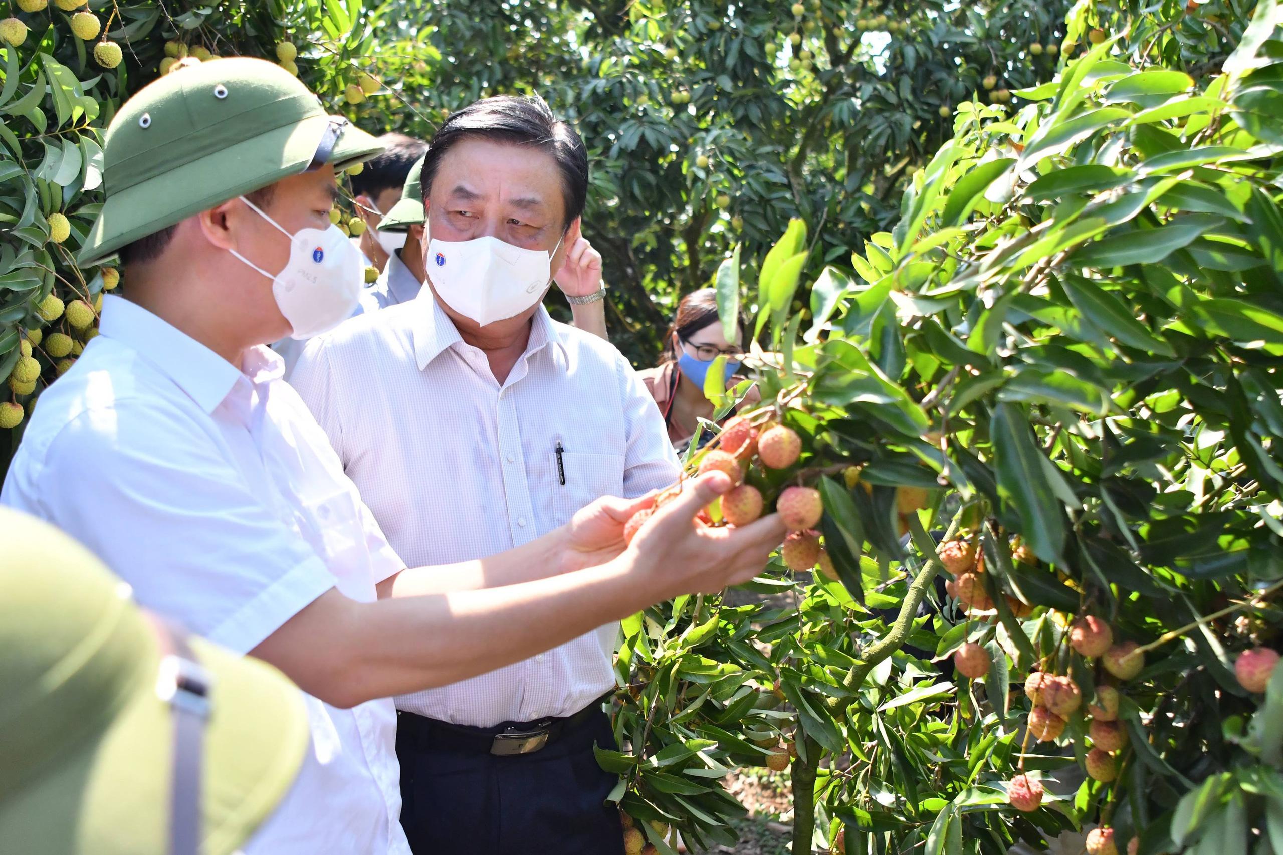 Bộ trưởng Lê Minh Hoan hứa sẽ kiến nghị Thủ tướng việc khó Bắc Giang không giải quyết được trong tiêu thụ vải thiều - Ảnh 1.