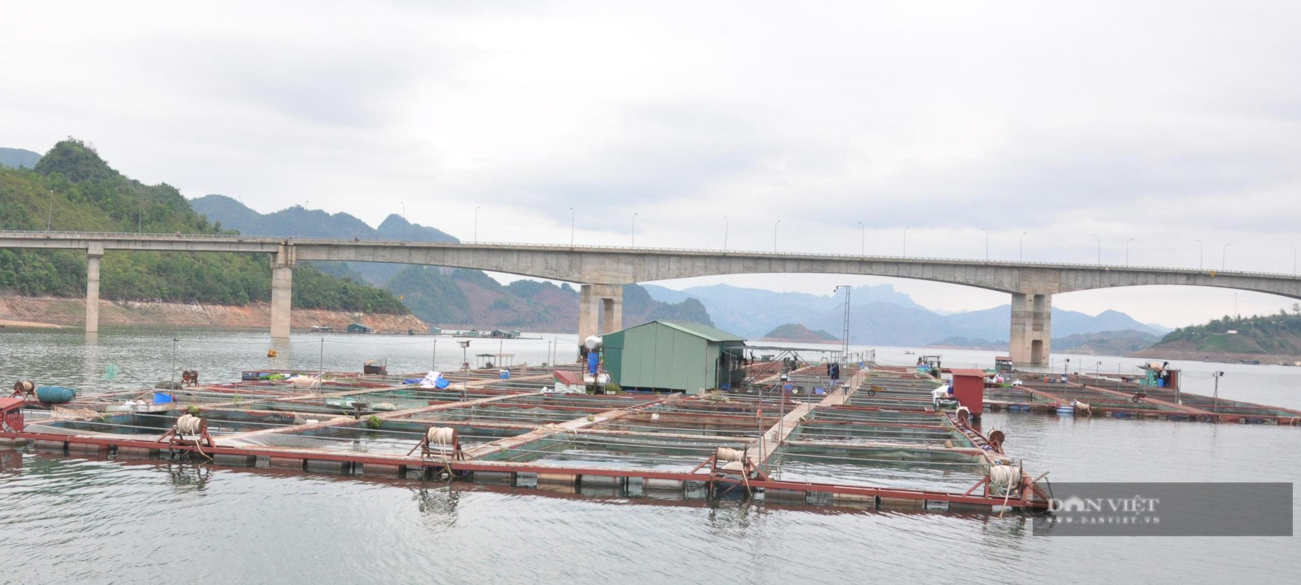 Ảnh hưởng Covid - 19, trăm tấn cá đặc sản ế ẩm, người dân Sơn La thiệt đơn, thiệt kép - Ảnh 1.