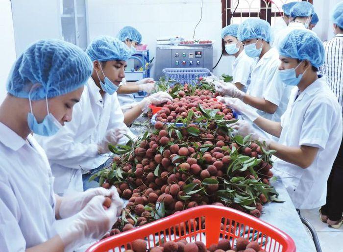Xuất khẩu nông, lâm, thủy sản Việt Nam tăng 30,3% trong 5 tháng năm 2021 - Ảnh 2.