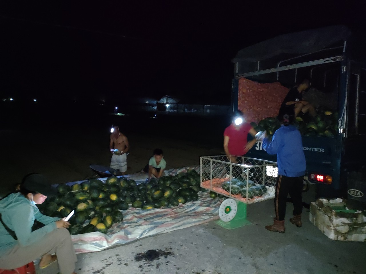 Nắng nóng đỉnh điểm: Nông dân Nghệ An thắp đèn thu hoạch dưa - Ảnh 2.