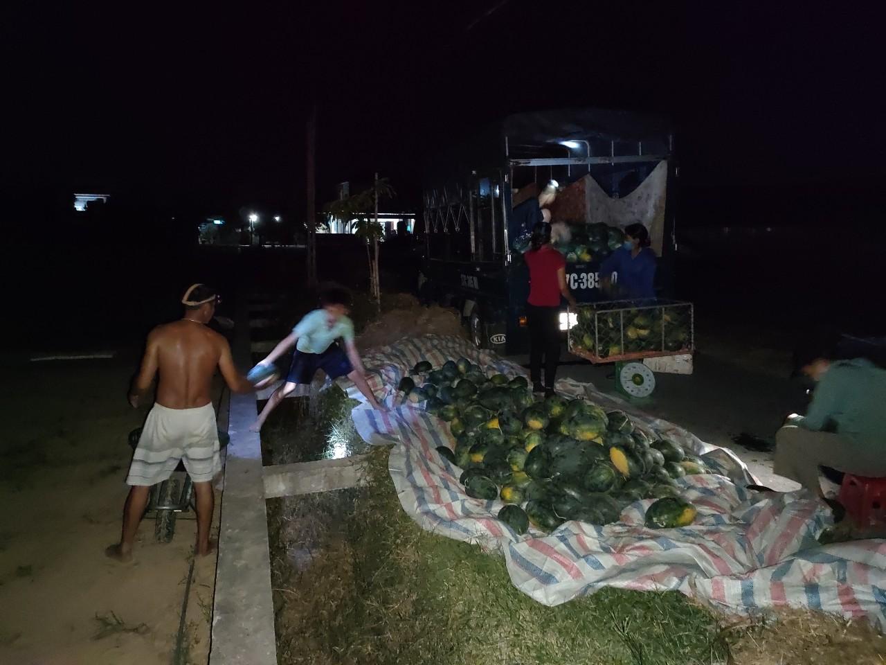 Nắng nóng đỉnh điểm: Nông dân Nghệ An thắp đèn thu hoạch dưa - Ảnh 3.